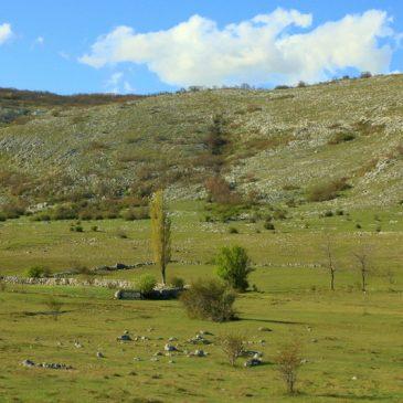 S VRHA GRUDE: Vile planinske
