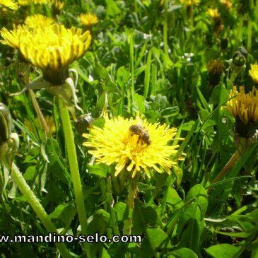 NAŠA OGNJIŠTA I NAŠA BAŠTINA: Pčele u vjere