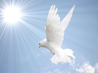 NAŠA OGNJIŠTA I NAŠA BAŠTINA: Ptica u prozoru
