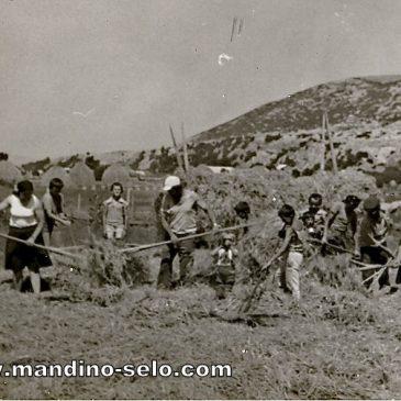 IZ ARHIVE: Vršidba na Kalčinoj Podvornici