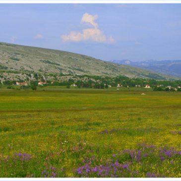ANTE ŠARAC: Mandino Selo