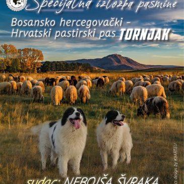 NAJAVA: Specijalna izložba pasmine bosansko-hercegovačko-hrvatskoga pastirskoga psa tornjaka 2. svibnja u Tomislavgradu
