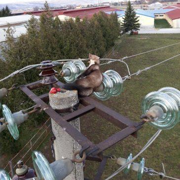 KRIVAC ZA PREKID U OPSKRBI ELEKTRIČNOM ENERGIJOM OD ĆAVAROVA STANA DO CRVENICA
