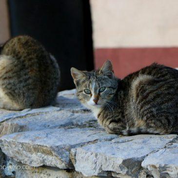 ISPOD IVIĆA, IZNAD DŽANKUŠIĆA (FOTO)