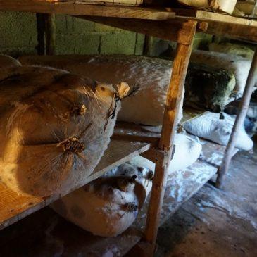 OMOLJE: Križin ovčji sir vrhunske kvalitete
