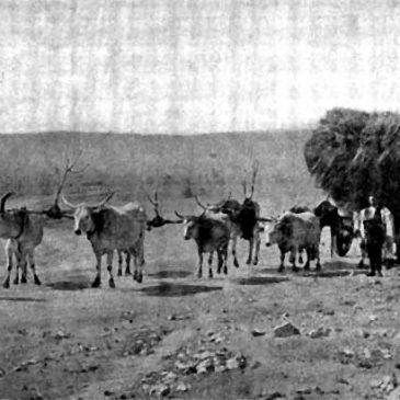 O DUVNU (ŽUPANJCU) 1899.