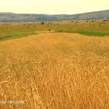 """NAJAVA: Predavanje na temu """"Agrotehnika uzgoja pšenice i štetnosti spaljivanja biljnih ostataka nakon poljoprivredne proizvodnje"""""""