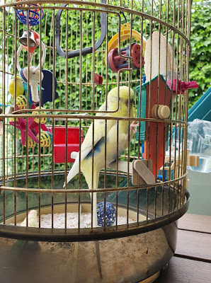 NIŠTARIJINI ZAPISI: Superptica Pero/ Supervogel Pero