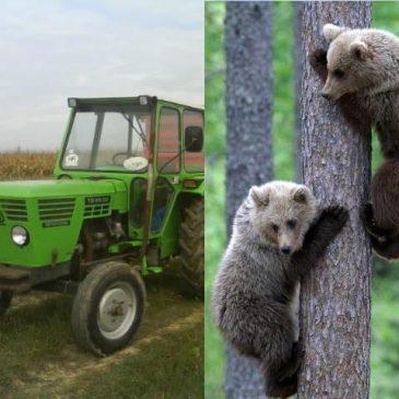 NIŠTARIJINI ZAPISI: Zeleni traktor i dva medvjedića